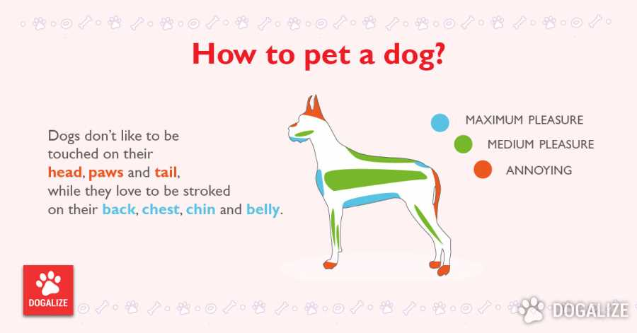 How to pet a dog?