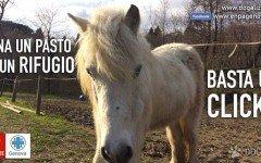 Enpa Sezione di Genova: Dona con un click