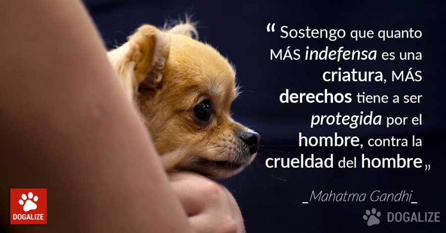 indefensa