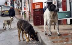 perros