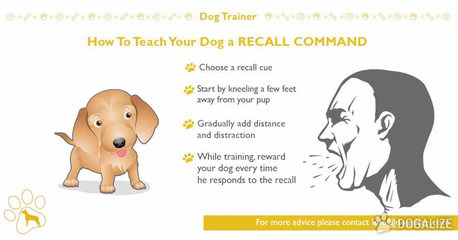 How To Teach Your Dog A Recall Command