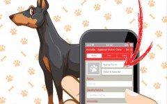 Libretto sanitario cane: che cos'è?