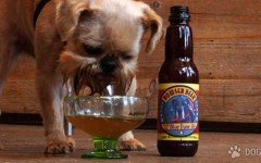 Beer for Dogs: now you'll always have a drinking buddy