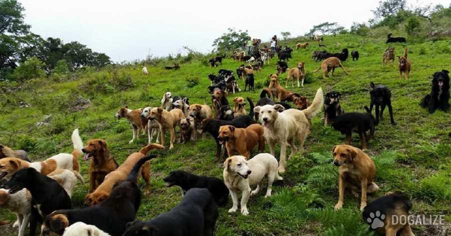 En Costa Rica el paraìso de los perros callejeros