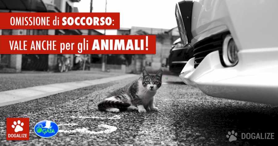 E' reato investire un gatto e non prestare soccorso investimento animali