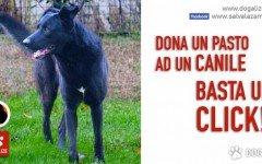 Salva La Zampa Onlus