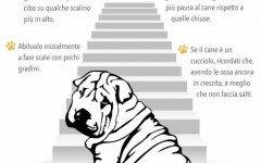 cane non vuol fare le scale