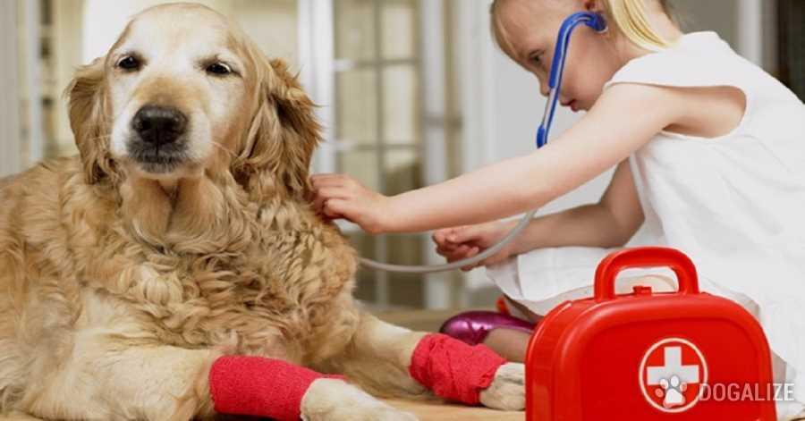 Kit de primeros auxilios para tu perro