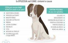 Epilessia nel cane