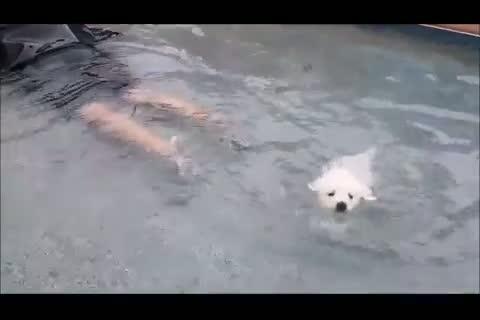 primo bagnetto