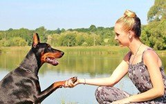 How To Improve The Bond With Your Dog