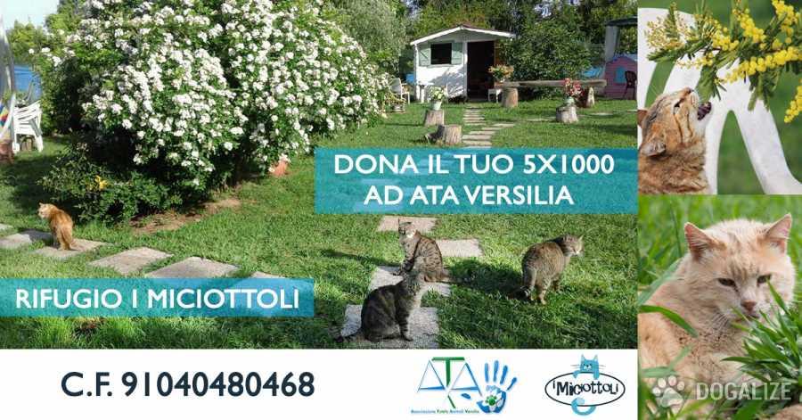 donazione 5x1000