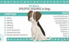 Dog disease: Epileptic Seizures In Dogs