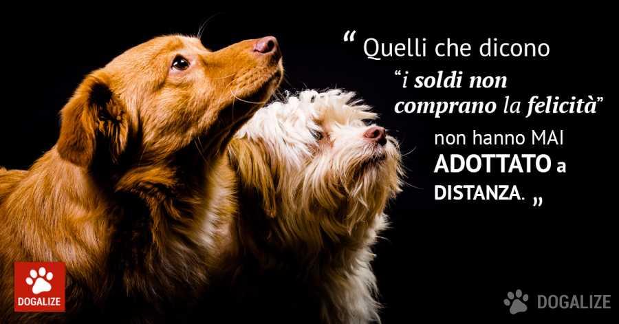 adottate un cane