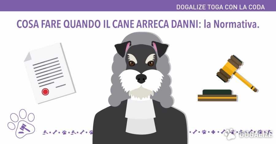 Cosa fare quando il nostro cane arreca danni: la normativa