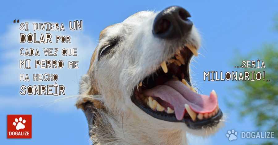Frases Para Perros Archivi Pagina 4 Di 26 Dogalize