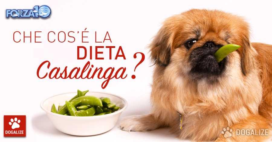 dieta casalinga per cani