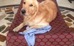 cane del marò Girone