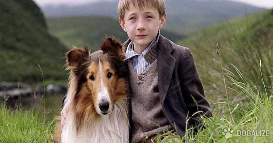 Los perros del cine : algunas películas para ver