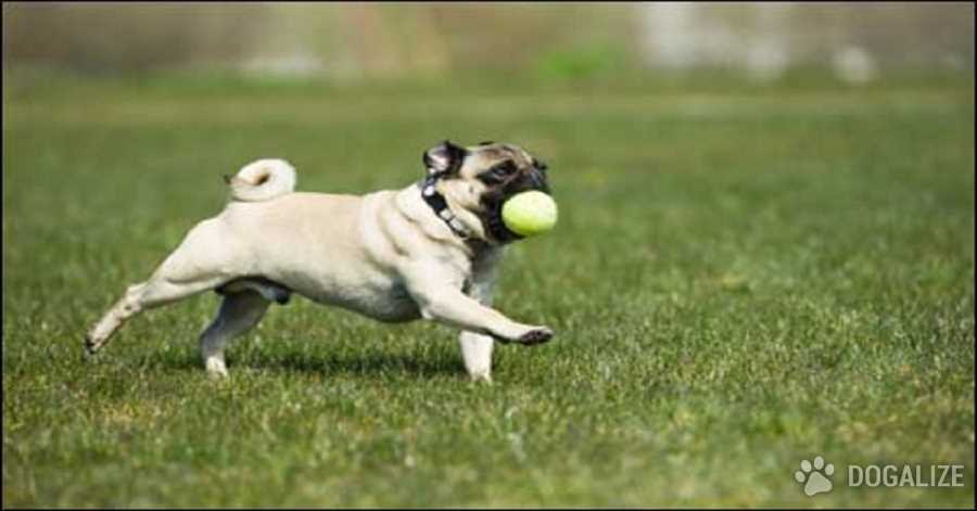 Dog Exercise: How Much Does He Really Need?