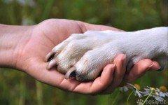 legge abbandono animali