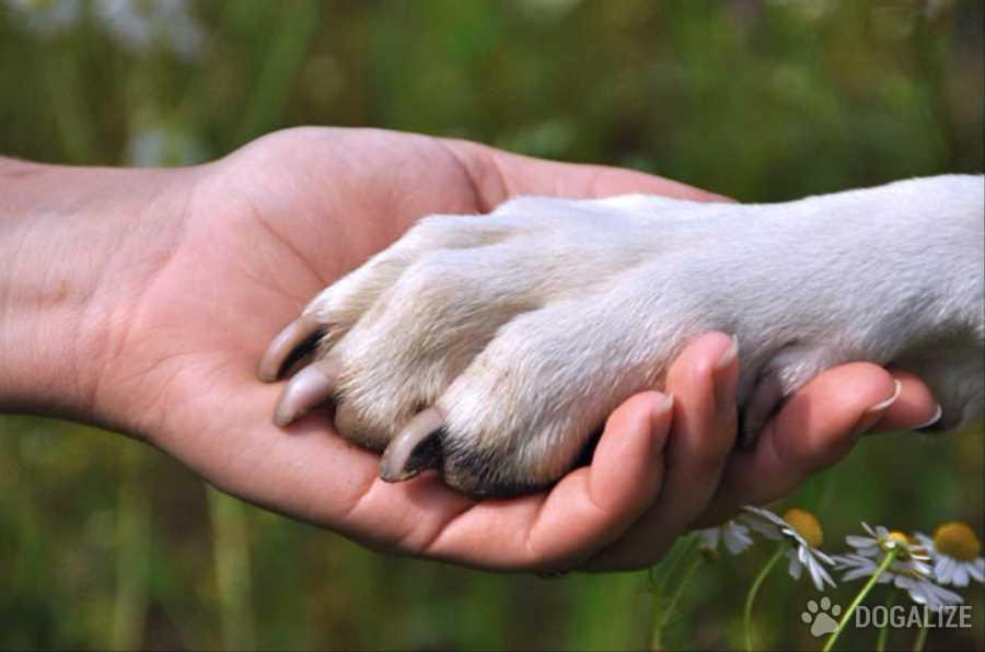 Cosa prevede la legge sull'abbandono cani ? Il reato abbandono animali