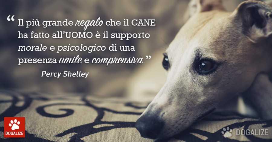 Supporto psicologico canino