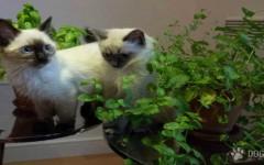 hierbas buenas para tu mascota
