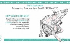 Causes and Treatments of Canine Dermatitis