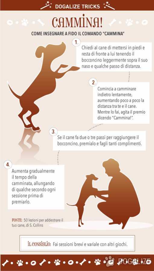 educa il tuo cane comando cammina