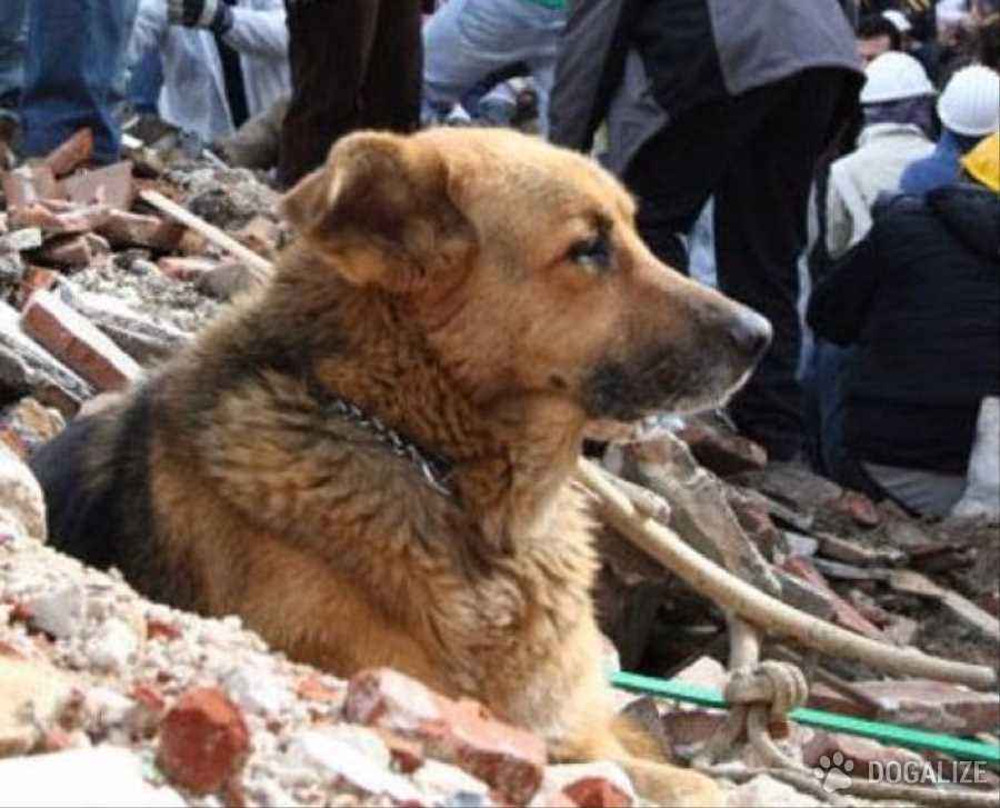 Terremoto - Il cane Adottato dai cittadini di Accumoli