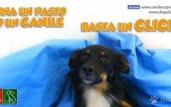 Cani abbandonati Lecce: Aiutiamo LUPINO