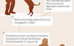 Il comando in piedi al cane in 5 semplici passaggi