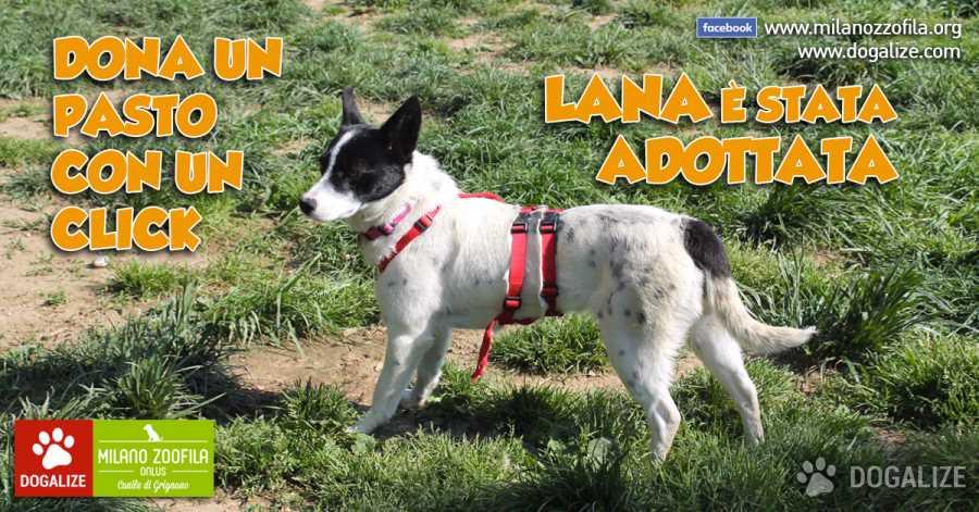 Cagnolina dolcissima in cerca adozione in Lombardia: la storia di LANA