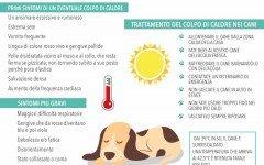 Il cane soffre il caldo: come gestire il colpo di calore del cane