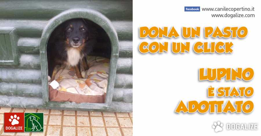 Enpa Copertino: adottiamo il dolcissimo cagnolino LUPINO