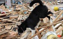 Sono più di 60 le Persone salvate dai cani nel Terremoto che ha colpito il Centro Italia