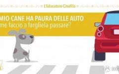 cane ha paura delle automobili