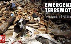 Pet Shop solidale per adozione cani terremoto