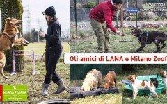 Adozione cani Bergamo: i cani di Milano Zoofila Onlus