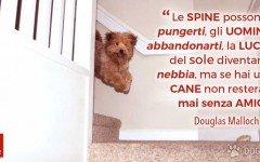 Aforismi e citazioni sul cane Mai senza amici, se hai un cane! | Dogalize Può succedere qualsiasi cosa nella vita di una persona; puoi sta