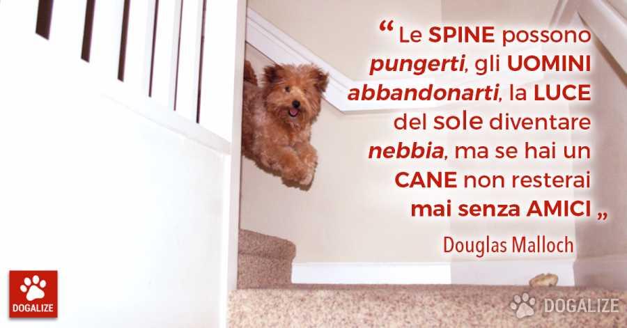 Aforismi e citazioni sul cane Mai senza amici, se hai un cane!   Dogalize Può succedere qualsiasi cosa nella vita di una persona; puoi sta