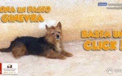 Adotta un cane ospite di un' Associazione Animalista