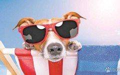 El verano y nuestro perro: 7 Cosas Que Debes Evitar