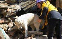 Ritrova il cane perso durante il terremoto