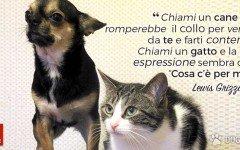 La differenza tra cane e gatto? Eccola!