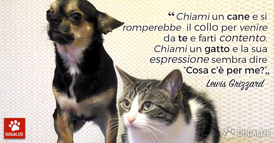 La differenza tra cane e gatto? Eccola!