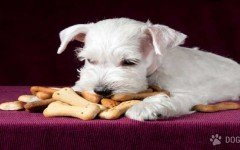 Crackers caseros para mascotas