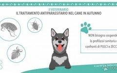 Antiparassitario: Autunno con cane