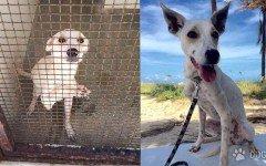 Joven salva perros y gatos de un horrible zoologico en Bahrein